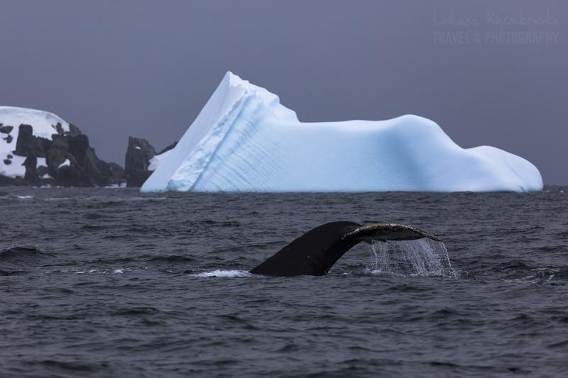 _M4_3373-antarktyda-wieloryb