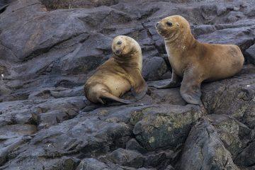 _M4_3694-antarktyda-Beagle-Ushuaia-foki