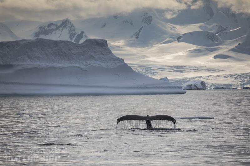 _M4_7465-antarktyda-wieloryby