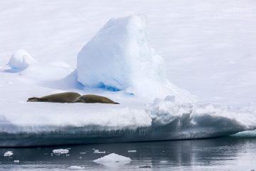 _M4_9189-antarktyda-foki-lod