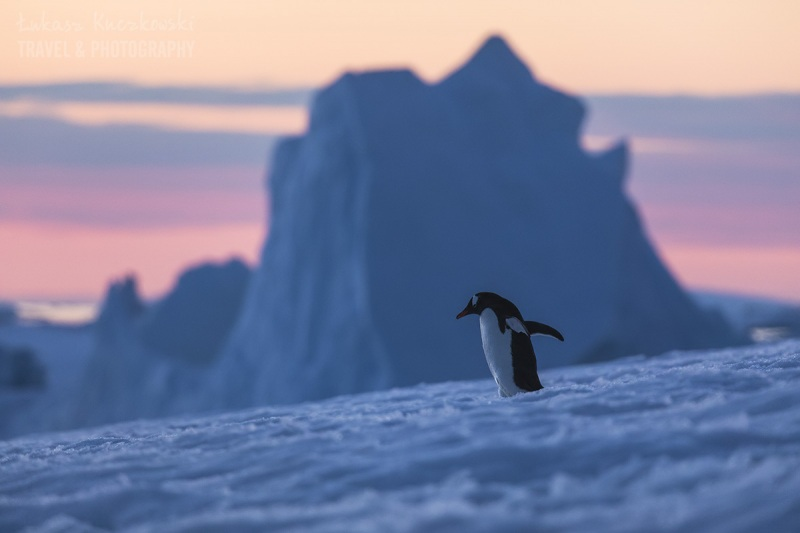 _M4_9523-antarktyda-pingwin-gora-lodowa