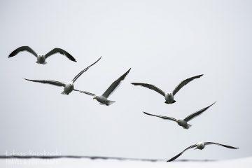 _MG_6274-ptaki