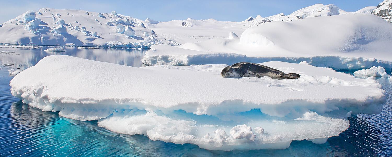 lampart-antarktyda