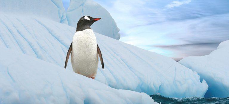 Dlaczego Antarktyda?